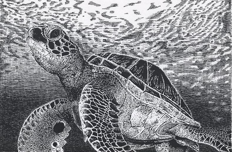 Ink Sea Turtle