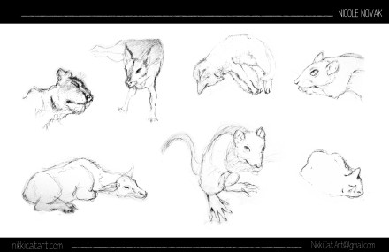 Animal Life Drawing